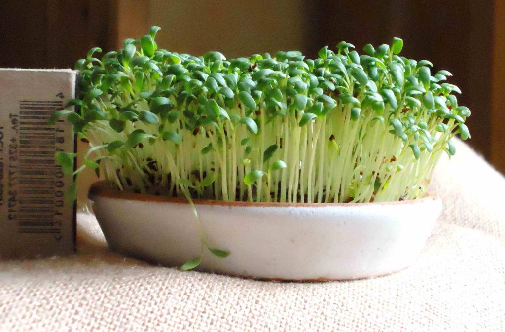 Как вырастить кресс салата в домашних условиях