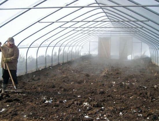 Обязательно делайте уборку старых растений после снятия урожая и вносите в почту удобрение.