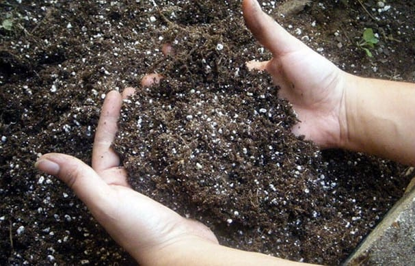 Удобрение почвы минеральной подкормкой незадолго до высадки рассады