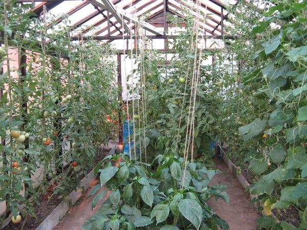 pomidory-i-ogurcy-pod-odnoj-kryshej-2