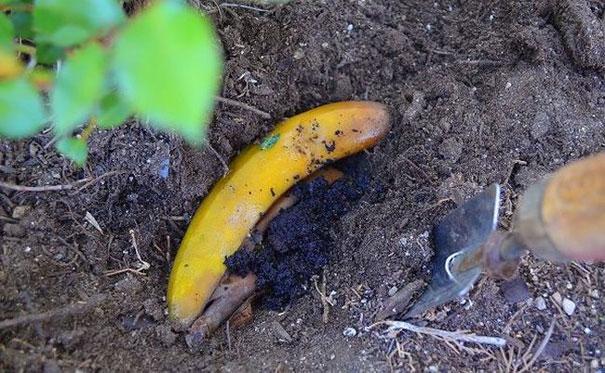 udobreniya-iz-bananovoj-kozhury-5