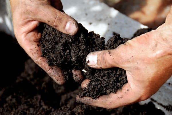 Проверка качества почвы