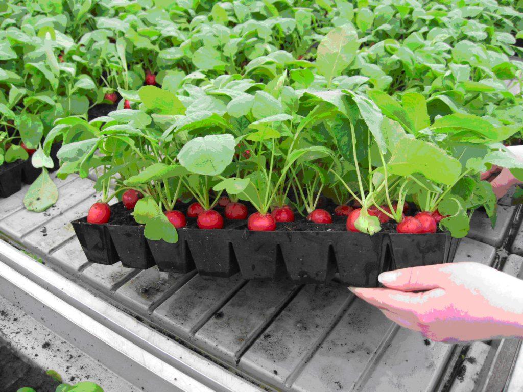 Как вырастить овощи на балконе или в лоджии: от салата до то.