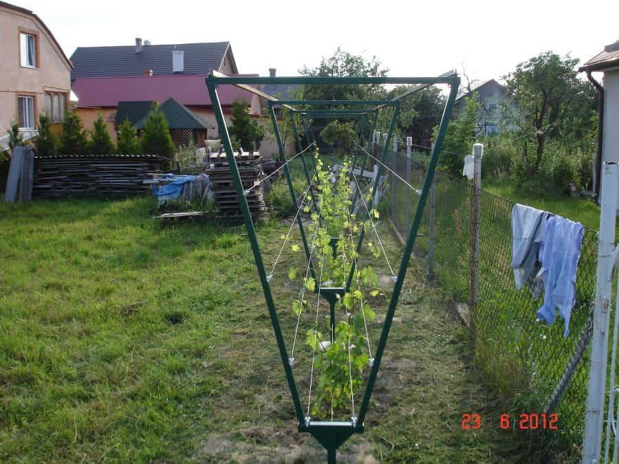 Опоры для винограда своими руками фото на  58