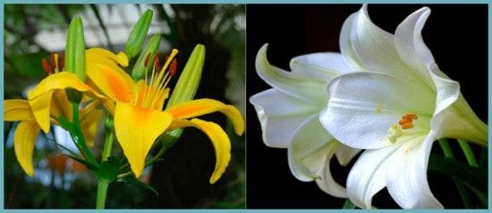 Популярный цветок