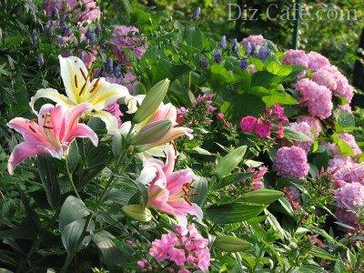 Стебли во время цветения