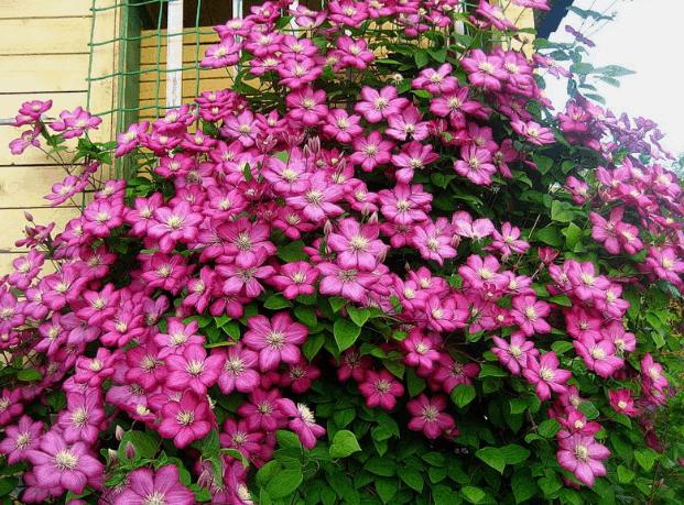 Яркий цветы