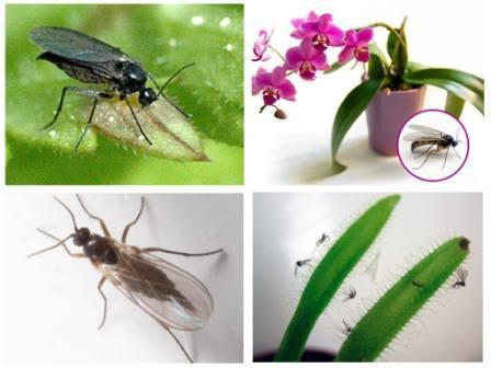 Грибные комарики