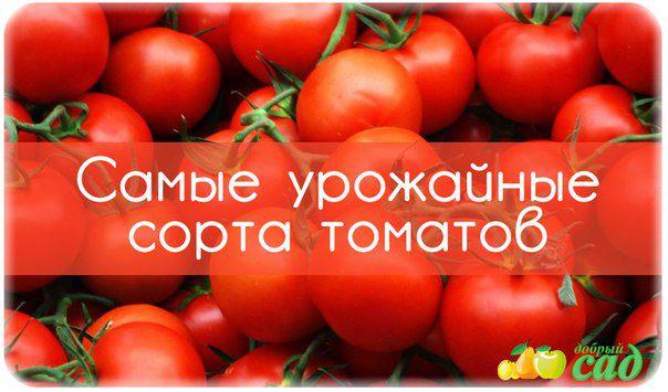 Самые урожайные сорта