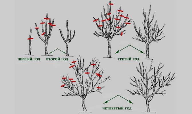 Обрезка груши осенью, весной, летом: как правильно обрезать 41