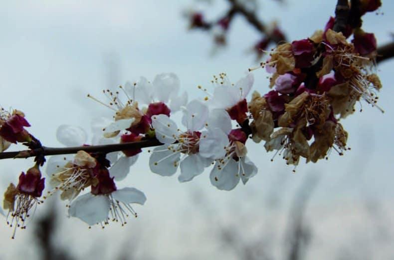 Цветение