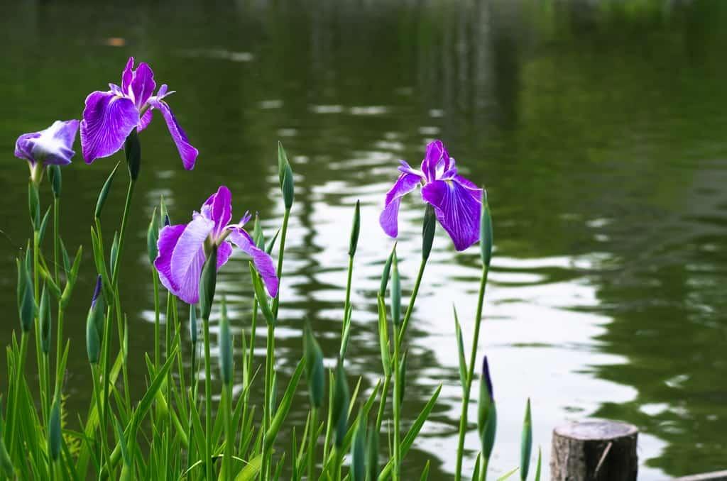 Цветы у водоема