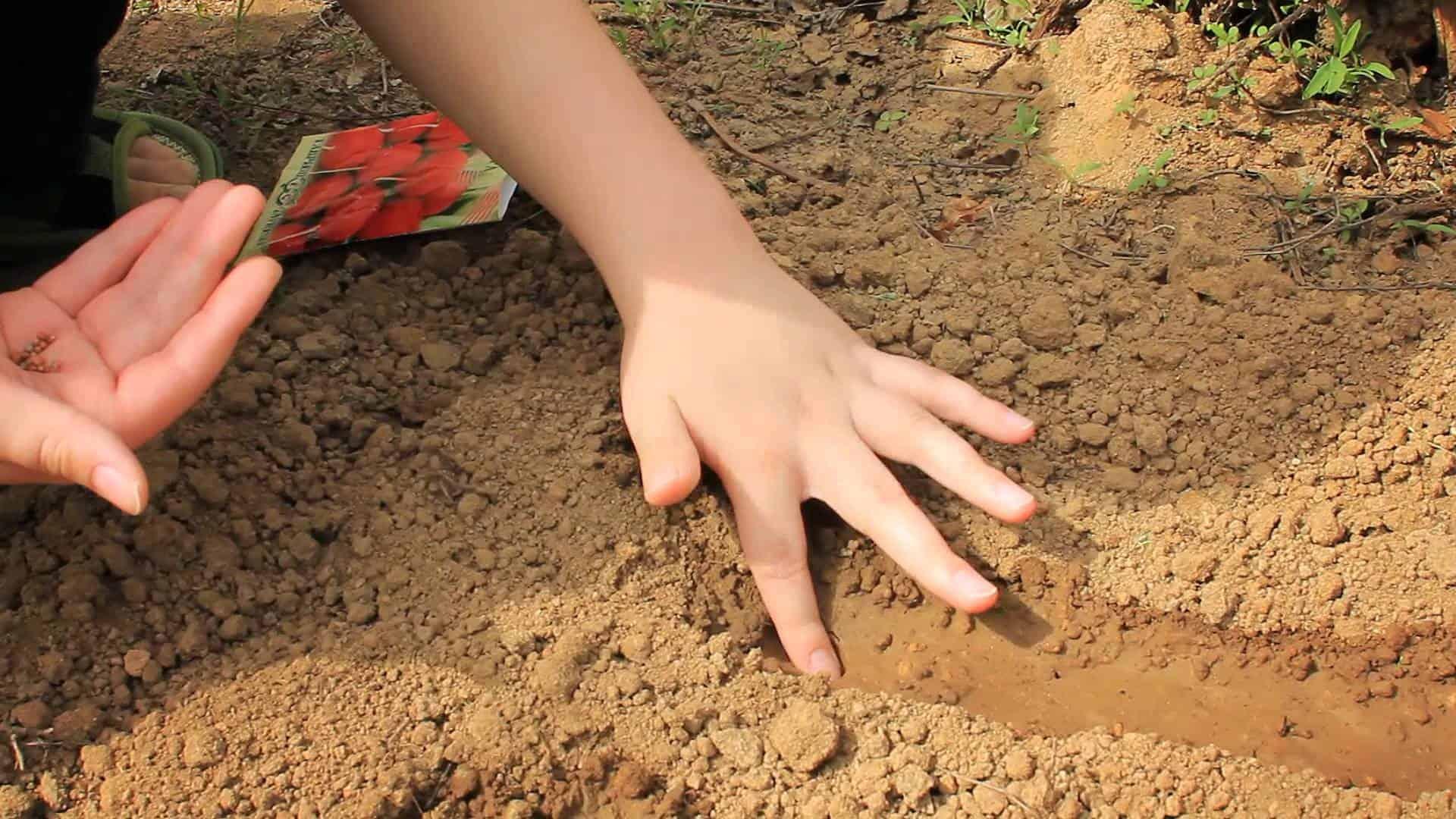 Как и когда сажать картофель весной 2017: благоприятные дни 50
