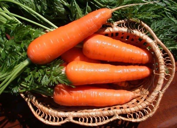 Спелая морковь