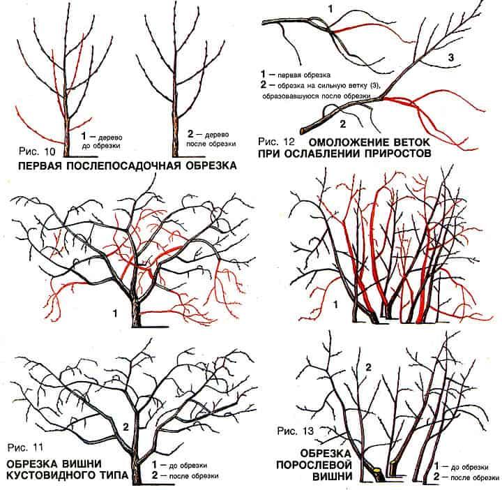 Верная обрезка дерева