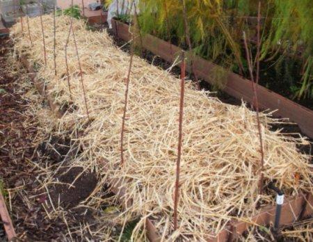 Избавление от сорняков
