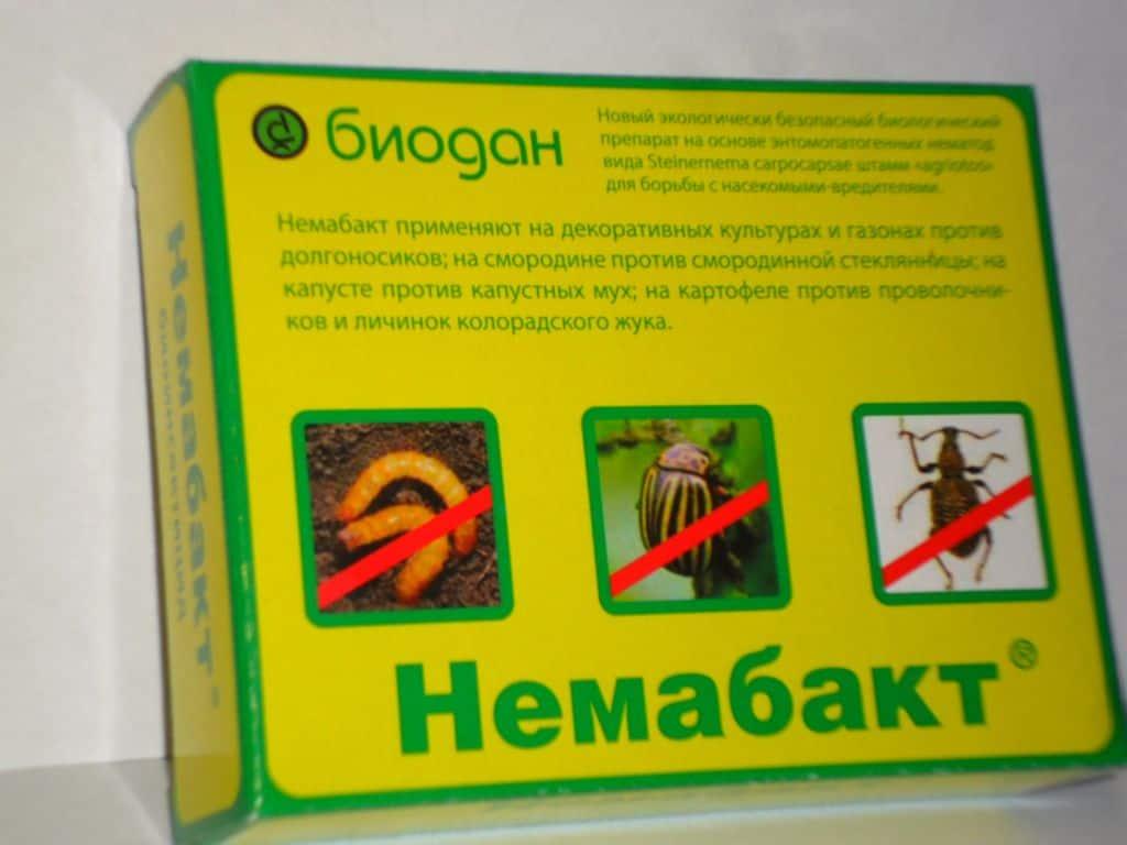 Немабакт - поможет избавиться и от проволочника, и от колорадского жука.
