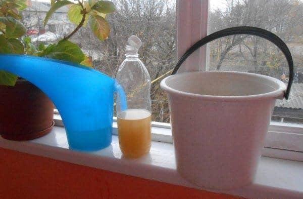 Фитоверм одинаково подходит и для огородных культур, и для комнатных растений.