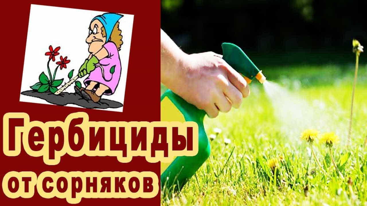 kak-izbavitsya-ot-sornyakov-3