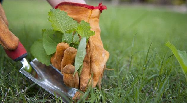 В борьбе с сорняками, помимо использования гербицидов, не пренебрегайте и обычными аграрными методами.