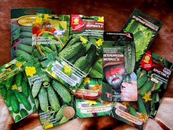 Покупайте семена только в специализированных магазинах!