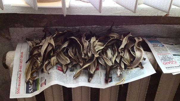 Ранней весной, пока еще не отключили отопление, банановую кожуру можно высушивать на батарее, оставляя ее в таком виде на ночь.