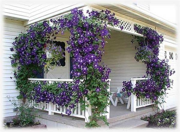 veranda-uvitaya-klematisom