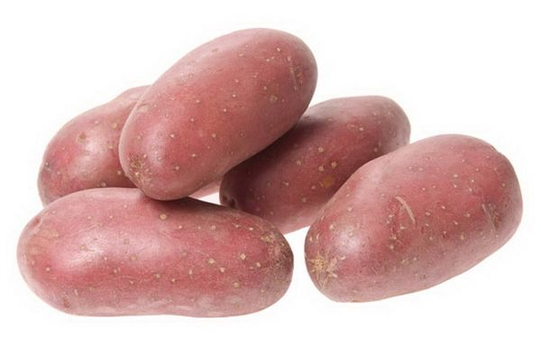 Картофель сорта Родриго