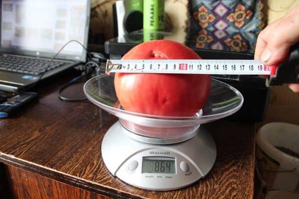 Характеристики томатов Малиновое чудо