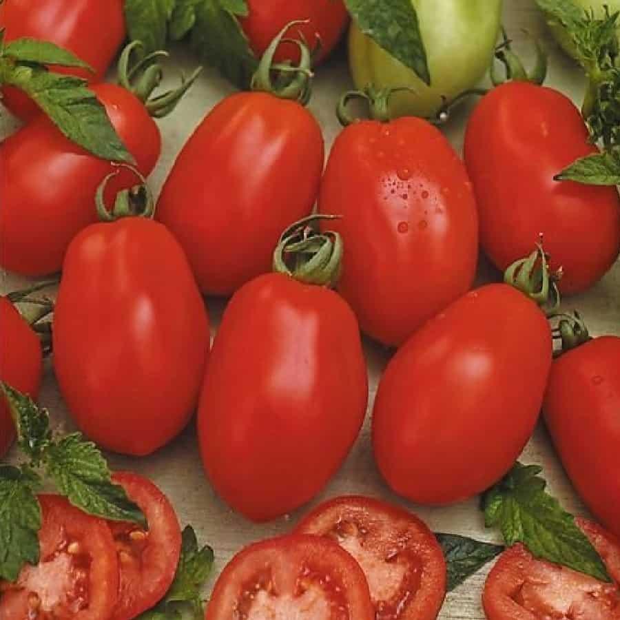 лучевой картинки сорта томатов как заработать