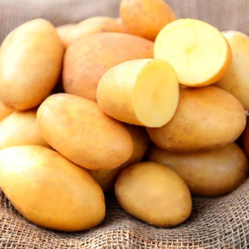 Картофель ласунок описание и характеристика сорта урожайность с фото