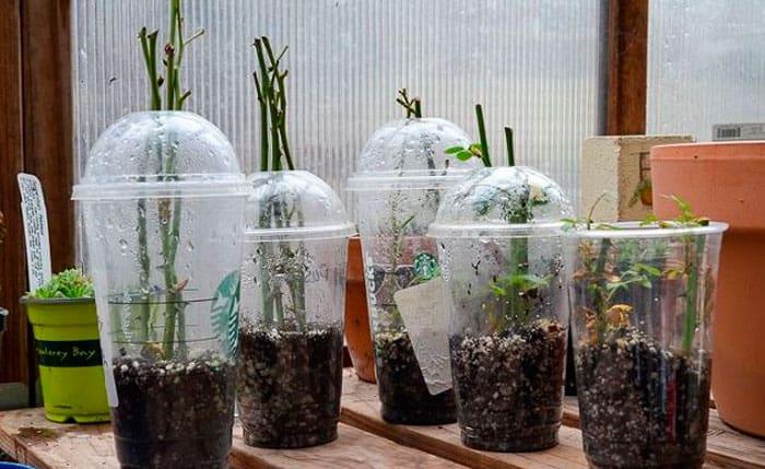 Укоренение растения
