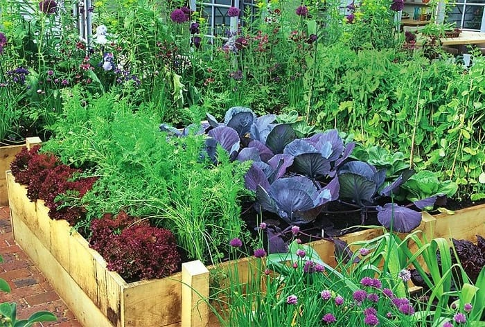 Соседство овощей на грядках таблица совместимости растений