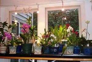 Подсветка орхидеи