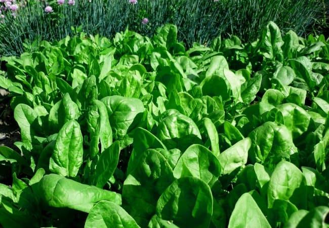 Выращивание растения