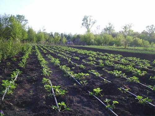 Посаженный огород