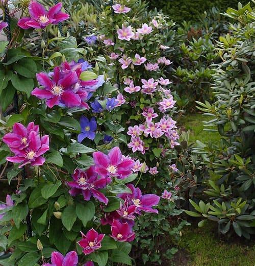 Рассадка цветов