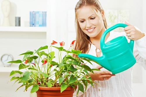 Уход за растением