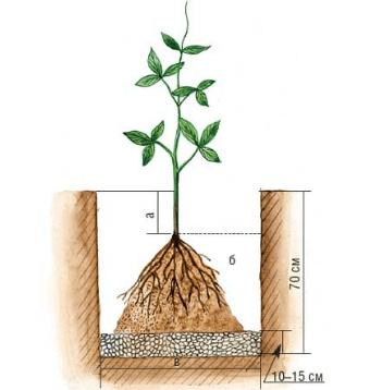 Пример посадки в грунт