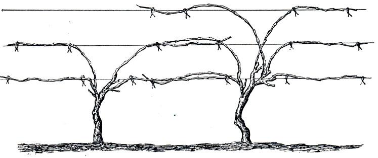 Штамбовая форма
