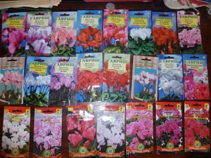 Разнообразие семян