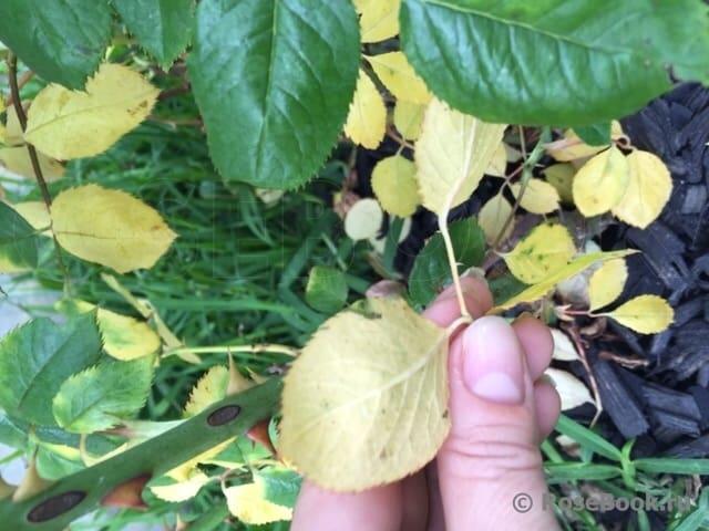 Пожелтевший листок