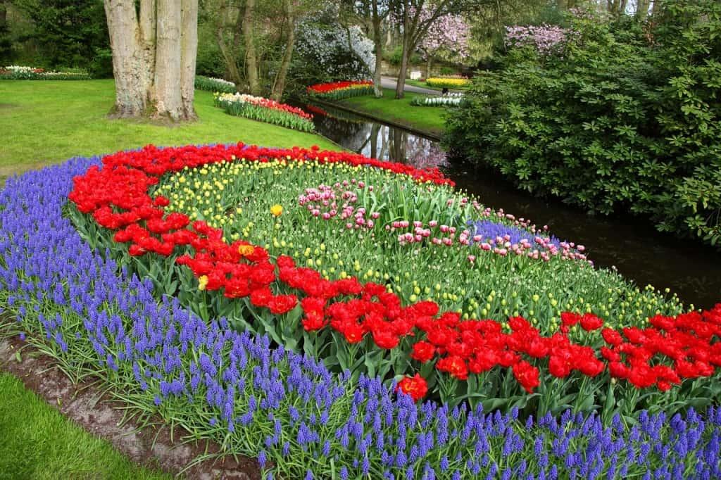 какие цветы садить весной фото и название приезжают отдых