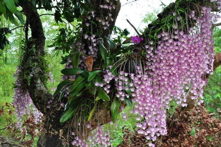 Растение на дереве