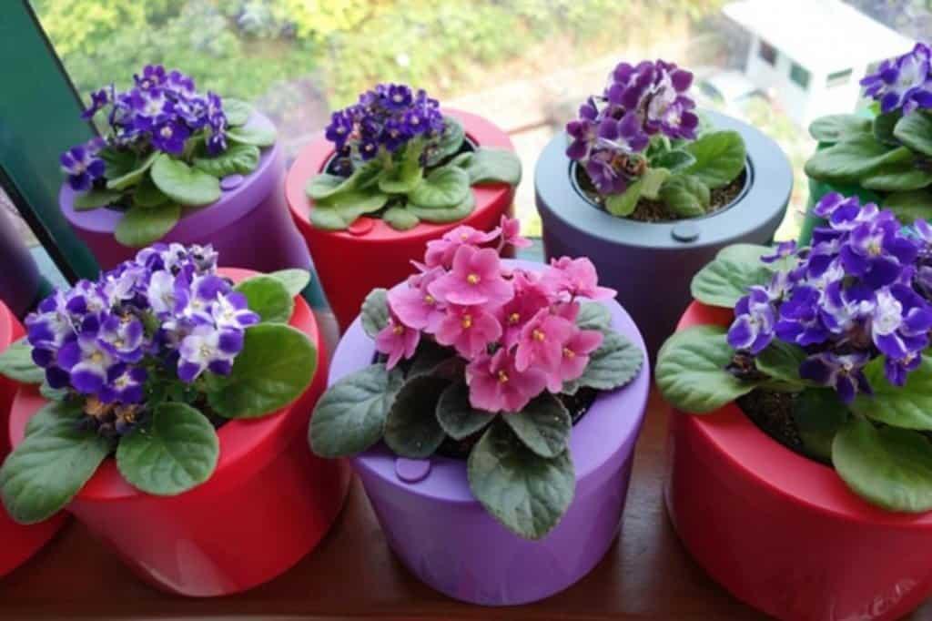 Яркие растения