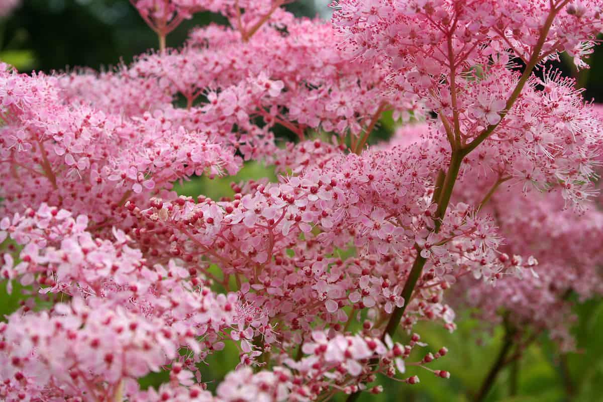 Яркое цветение