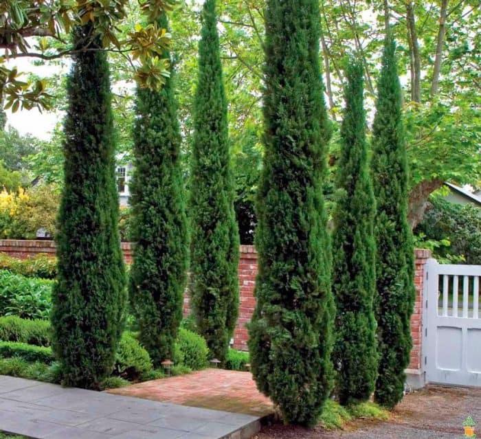 Использование можжевельников в ландшафтном дизайне сада