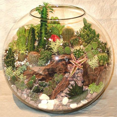 Флорариум из аквариума своими руками 33