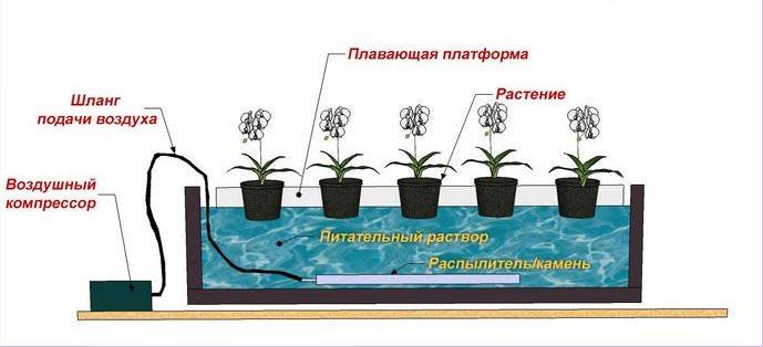 Гидропоника в домашних условиях семенами льна Курительные смеси приобрести Новочеркасск