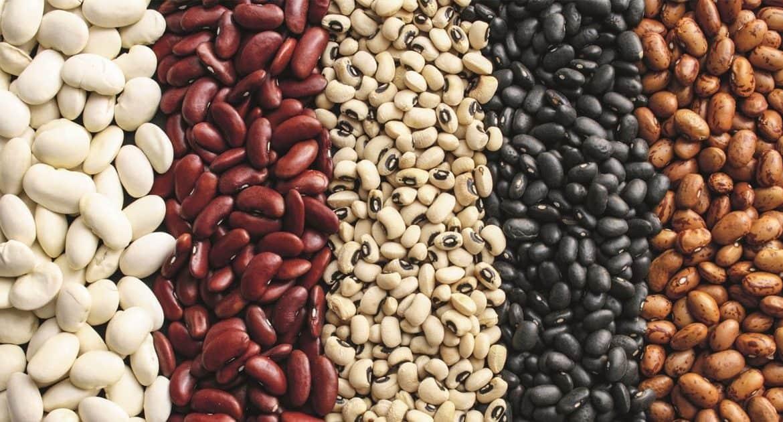Фасоль посадка и уход в открытом грунте Посадка фасоли семенами Сроки и схема посадки
